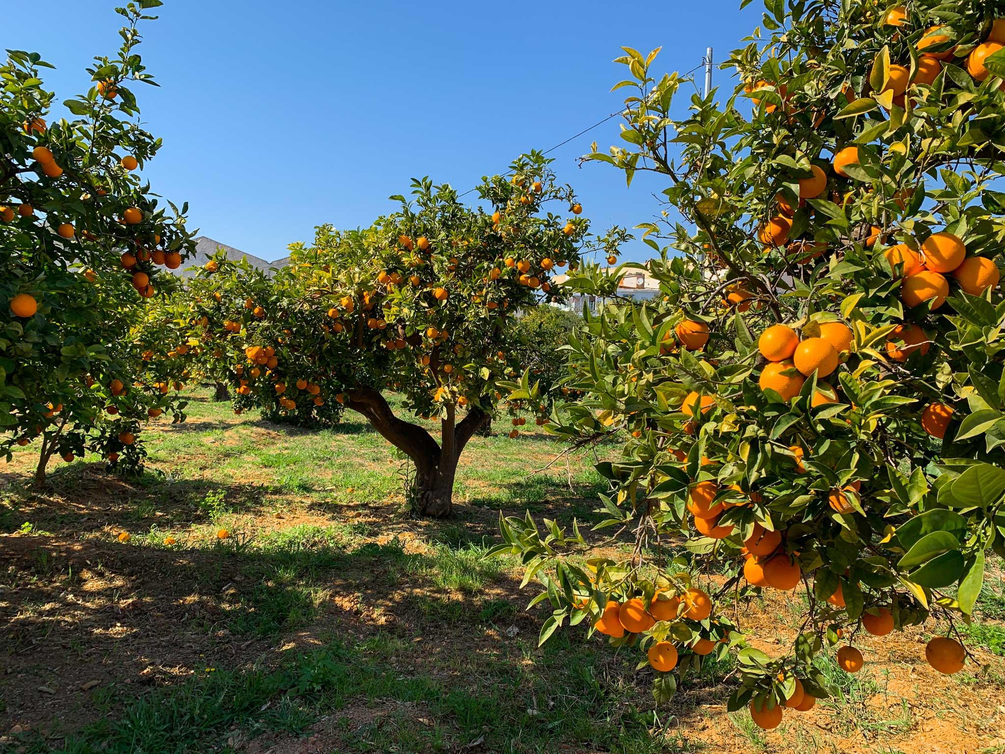 Oransje og innbydende